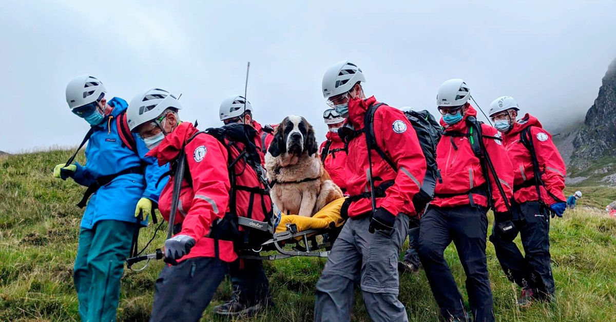 Daisy Was Tired. So a Rescue Team Hefted the 121-Pound St. Bernard Dog Down a Mountain