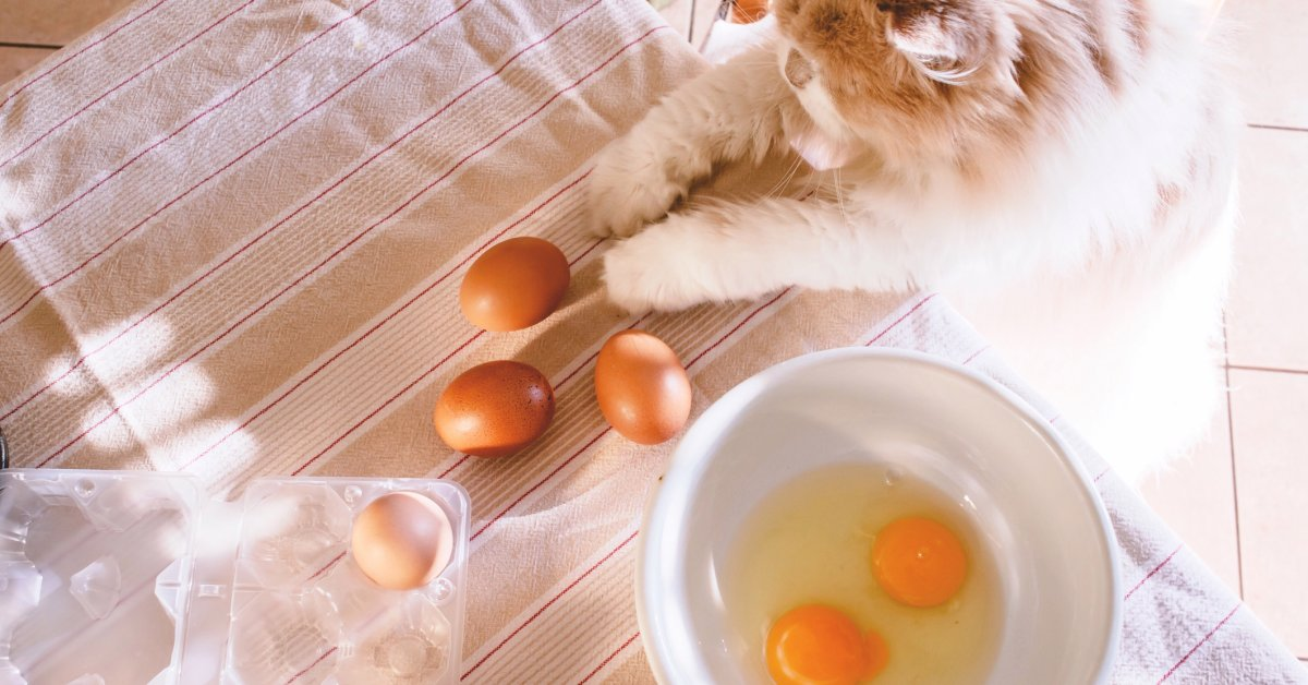 People Are Now Giving Cats Fragile Eggs to See If They'll Keep Them From Cracking
