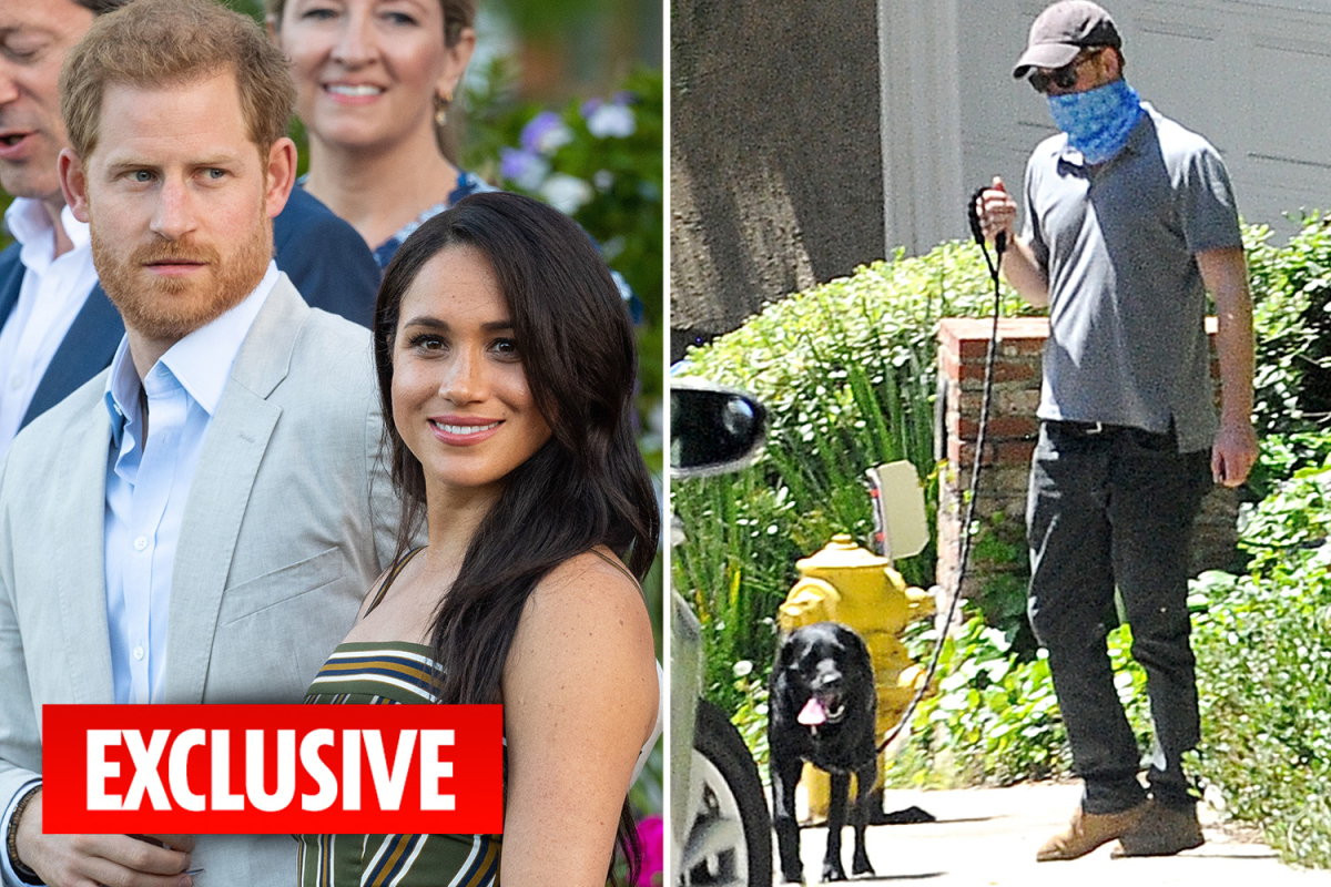Prince Harry and Meghan Markle mocked as their dog Pula's name is Romanian slang for 'penis'