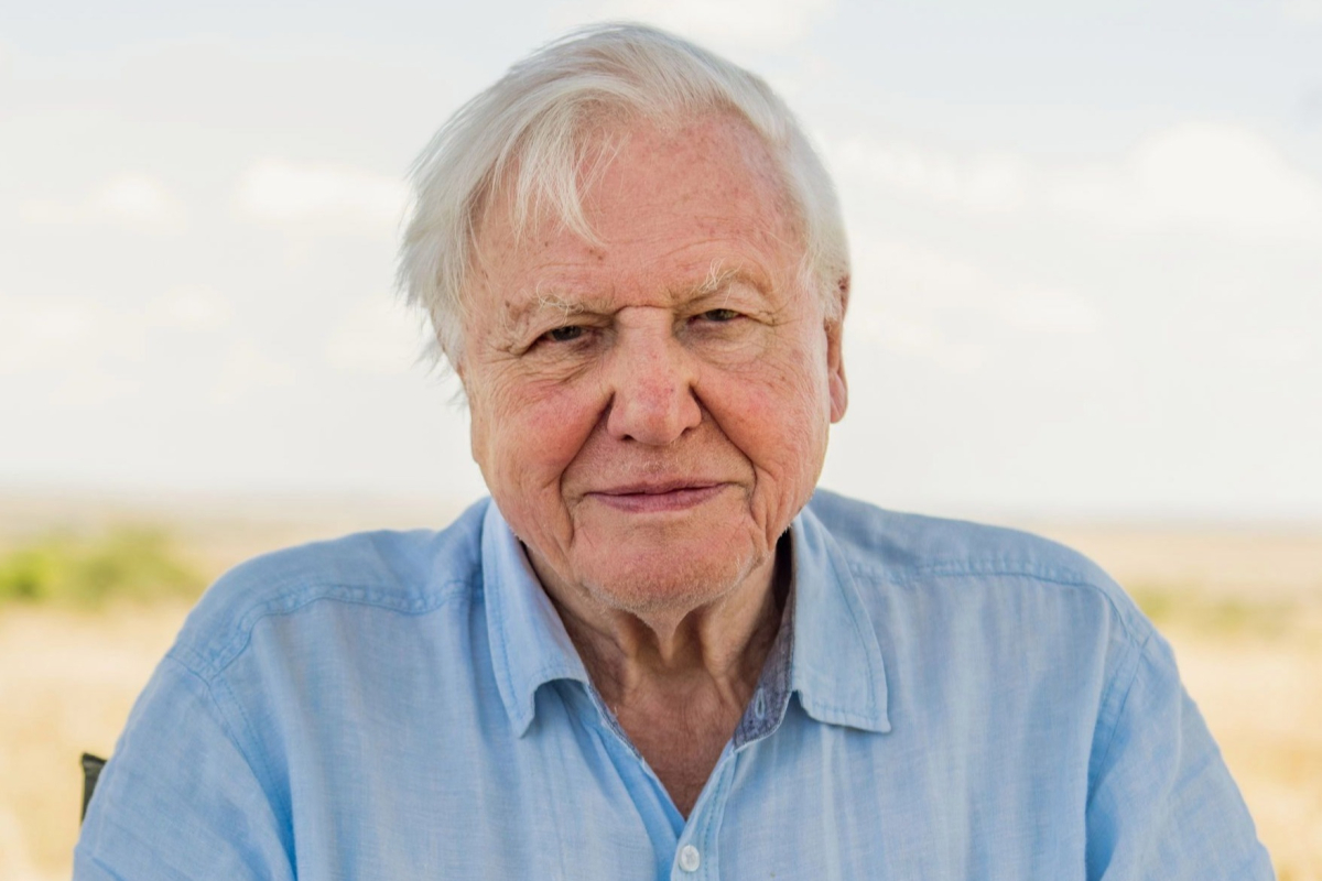 Sir David Attenborough warns the end of polar bears by 2030s and ANOTHER major pandemic unless we tackle climate change