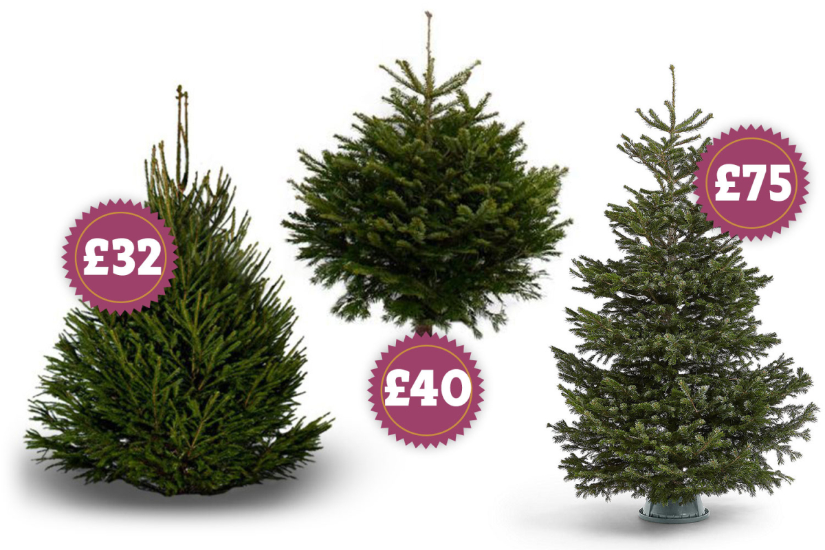 Best real Christmas trees to order online including Pines and Needles and Croft and Cole